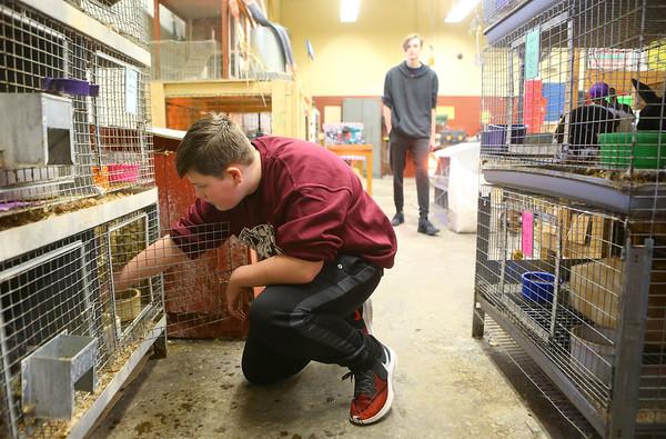 Maconaquah High School freshman Jonah Spangler, 14, checks on the rabbits in the Brave Bunny Rabbitry on Feb. 26, 2020.<br /> Kelly Lafferty Gerber   Kokomo Tribune