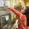 Freshman Emma Smith, 15, makes sure one of the rabbits has enough food and water in Maconaquah High School's Brave Bunny Rabbitry on Feb. 26, 2020.<br /> Kelly Lafferty Gerber | Kokomo Tribune