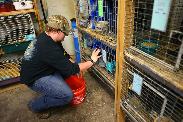 Freshman Braiden Holley, 15, makes sure to rabbits have enough food in Maconaquah High School's Brave Bunny Rabbitry on Feb. 26, 2020.<br /> Kelly Lafferty Gerber | Kokomo Tribune