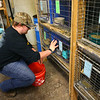 Freshman Braiden Holley, 15, makes sure to rabbits have enough food in Maconaquah High School's Brave Bunny Rabbitry on Feb. 26, 2020.<br /> Kelly Lafferty Gerber | Kokomo Tribune