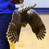 Elwood Haynes Elementary students were treated to birds of prey from the American Eagle Foundation thanks to a grant by Duke Energy on January 28, 2020. <br /> Tim Bath | Kokomo Tribune