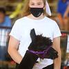 Llama and alpaca show at the Howard County 4-H Fair on Wednesday, July 15, 2020.<br /> Kelly Lafferty Gerber   Kokomo Tribune