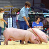 Piper James and Anthony Dunten - <br /> Showing swine in the Howard County 4-H Fair on July 17, 2020.<br /> Tim Bath | Kokomo Tribune