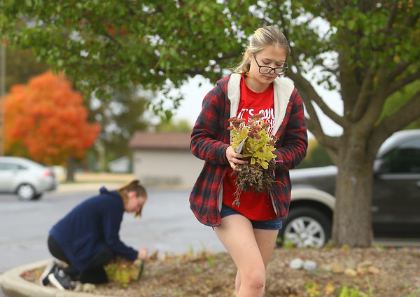Abby Thatcher works on replanting flowers in the butterfly garden at Kokomo-Howard County Public Library's south branch on October 15, 2020. Working on the butterfly garden was Thatcher's Eagle Scout project.<br /> Kelly Lafferty Gerber   Kokomo Tribune