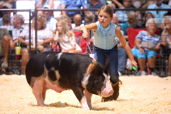 7-14-21<br /> Parker Johnson showing in the swine show at the Howard County Fair Wednesday.<br /> Tim Bath | Kokomo Tribune