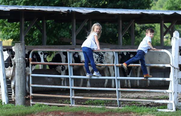 Siblings Hayden and Kasen Musselman climb the gate at the farm on Thursday, July 1, 2021.<br /> Kelly Lafferty Gerber   Kokomo Tribune