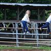 Siblings Hayden and Kasen Musselman climb the gate at the farm on Thursday, July 1, 2021.<br /> Kelly Lafferty Gerber | Kokomo Tribune