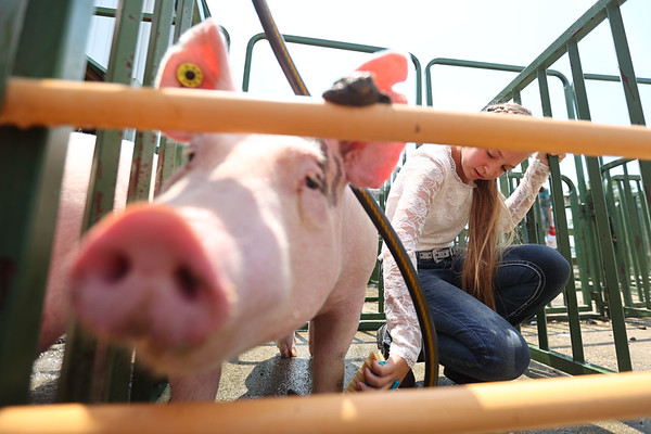 7-14-21<br /> Emily Princell washing her pig before the swine show at the Howard County Fair Wednesday.<br /> Tim Bath   Kokomo Tribune