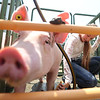 7-14-21<br /> Emily Princell washing her pig before the swine show at the Howard County Fair Wednesday.<br /> Tim Bath | Kokomo Tribune