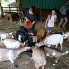 7-14-21<br /> Bryan Schwartz feeding the animals at Blue Barn Farms run by Stephanie Schwartz and family.<br /> Tim Bath   Kokomo Tribune