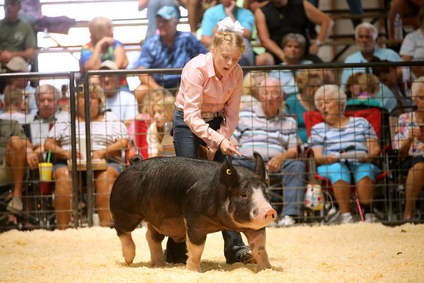 7-14-21<br /> Addyson Eads moving her animal around the arena at the Howard County Fair Wednesday.<br /> Tim Bath   Kokomo Tribune