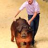 7-14-21<br /> Kolton Crouch showing his animal at the Howard County Fair Wednesday.<br /> Tim Bath | Kokomo Tribune