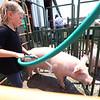 7-14-21<br /> Reagan Princell washing her pig before the swine show at the Howard County Fair Wednesday.<br /> Tim Bath | Kokomo Tribune