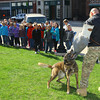 3-17-14   --- Western Intermediate School 3rd graders tour the Howard County Courthouse and get a drug dog demonstration from the Sheriffs department. Russiaville Police dog Kayos demonstrating for the kids how he apprehends a suspect. Deputy Paul Cherry acts as the suspect. -- <br />   Tim Bath | Kokomo Tribune