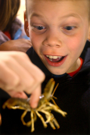 4-23-14   --- Earth Day event at the Ivy Tech Kokomo Event & Conference Center on Wednesday. Western Intermediate School 3rd grader Atticus Jenkins checks out a crawdad from the Wildcat Creek brought in by the Wildcat Guardians. -- <br />   Tim Bath | Kokomo Tribune