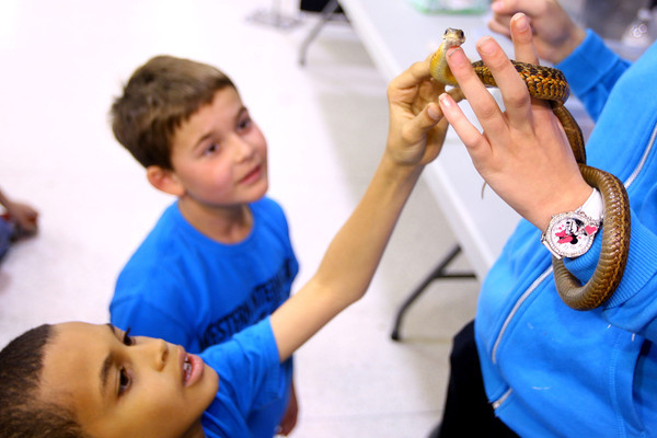 4-23-14   --- Earth Day event at the Ivy Tech Kokomo Event & Conference Center on Wednesday. With MJ Norman watching Aiden Stewart pets a snake from the Kirkendall nature center. They are 3rd graders from Western Intermediate School. -- <br />   Tim Bath | Kokomo Tribune