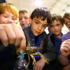 4-23-14   --- Earth Day event at the Ivy Tech Kokomo Event & Conference Center on Wednesday. Sts. Joan of Arc & Patrick School 3rd graders checks out a crawdad from the Wildcat Creek brought in by the Wildcat Guardians. -- <br />   Tim Bath | Kokomo Tribune