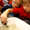 4-23-14   --- Earth Day event at the Ivy Tech Kokomo Event & Conference Center on Wednesday. Western Intermediate School 3rd graderMavrick Swisher and Dylan Hightower checks out a crawdad from the Wildcat Creek brought in by the Wildcat Guardians. -- <br />   Tim Bath | Kokomo Tribune