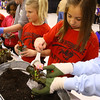 4-23-14   --- Earth Day event at the Ivy Tech Kokomo Event & Conference Center on Wednesday. Western Intermediate School 3rd graders Maisy Harlow and Sophia Moreno plant flowers that the Master Garderners club supplied. -- <br />   Tim Bath | Kokomo Tribune