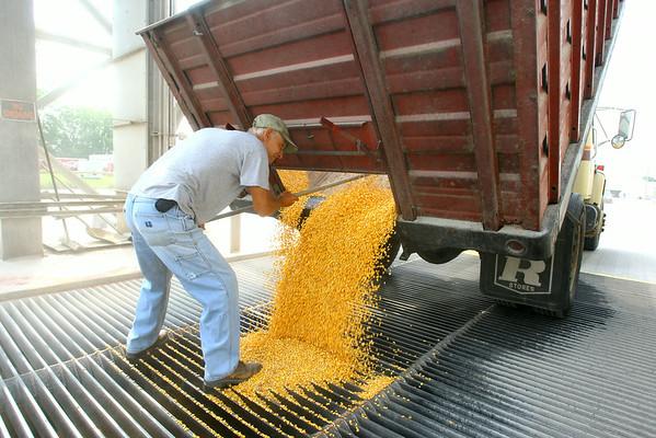8-1-14<br /> Greg Alexander dumping a load of corn at Kokomo Grain.<br /> Tim Bath | Kokomo Tribune