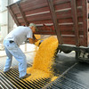 8-1-14<br /> Greg Alexander dumping a load of corn at Kokomo Grain.<br /> Tim Bath | Kokomo Tribune