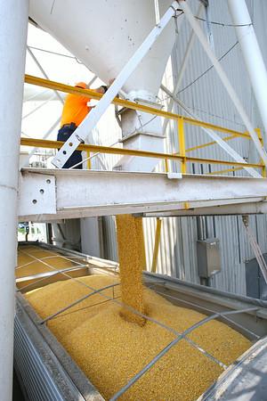 8-1-14<br /> Mike Ahrens loads a truck at Kokomo Grain<br /> Tim Bath | Kokomo Tribune