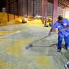 8-1-14<br /> Eddie Vega sweeping corn that is being outloaded from the 5 million bushel warehouse at Kokomo Grain<br /> Tim Bath   Kokomo Tribune