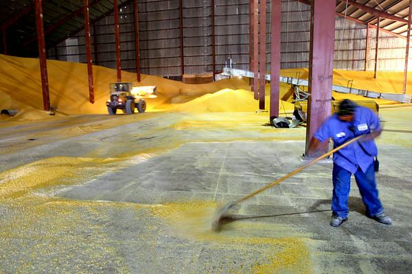 8-1-14<br /> Kokomo Grain<br /> Tim Bath | Kokomo Tribune