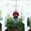 12-10-13<br /> Green River Greenhouse<br /> Brandon Caudill works in the pepper plants at the Green River Greenhouse.<br /> KT photo | Kelly Lafferty