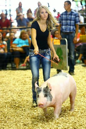 7-9-14 <br /> Howard County Fair swine judging.<br /> Tim Bath | Kokomo Tribune