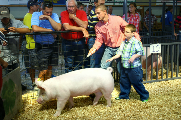 7-9-14 <br /> David Grimme helps his 9 year-old cousin Jake Deleon show one of Jake's animals at the Howard County Fair swine judging Wednesday.<br /> Tim Bath   Kokomo Tribune