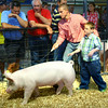 7-9-14 <br /> David Grimme helps his 9 year-old cousin Jake Deleon show one of Jake's animals at the Howard County Fair swine judging Wednesday.<br /> Tim Bath | Kokomo Tribune