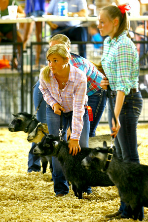 7-7-14 -- Sara Metcalf competing in the one of the goat shows at the Howard County Fair.    ---<br /> Tim Bath | Kokomo Tribune