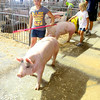 7-8-14 <br /> Howard County Fair. Ella and Audra Flannery taking their hogs for a wash.<br /> Tim Bath | Kokomo Tribune