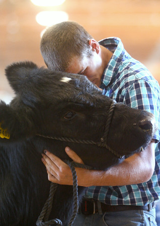 7-10-14<br /> Fair--Thursday<br /> Brice Biddle holds his steer in place during the Howard County 4H Fair Livestock Auction.<br /> Kelly Lafferty | Kokomo Tribune