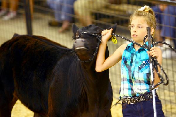 7-8-14 <br /> Howard County Fair. Jenna Yazel showing a steer.<br /> Tim Bath | Kokomo Tribune