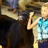 7-8-14 <br /> Howard County Fair. Jenna Yazel showing a steer.<br /> Tim Bath | Kokomo Tribune