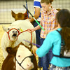 7-8-14 <br /> Howard County Fair. Audrey Wyrick showing a heifer.<br /> Tim Bath | Kokomo Tribune