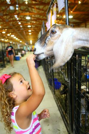 7-7-14 <br /> Howard County Fair. Lydia Camp, 4, handing out animal crackers.<br /> Tim Bath | Kokomo Tribune