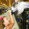 7-7-14 <br /> Howard County Fair. Lydia Camp, 4, handing out animal crackers.<br /> Tim Bath | Kokomo Tribune