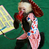 7-12-12<br /> JoJo the Monkey at Howard County Fair<br /> JoJo the white-faced capuchin monkey takes a short water break from taking quarters from people at the Howard County fair.<br /> KT photo | Kelly Lafferty