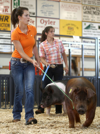 7-11-12<br /> Supreme Showmanship contest<br /> Erin Weber keeps her pig in line as she competes for the title of Supreme Showman on Wednesday.<br /> KT photo | Kelly Lafferty