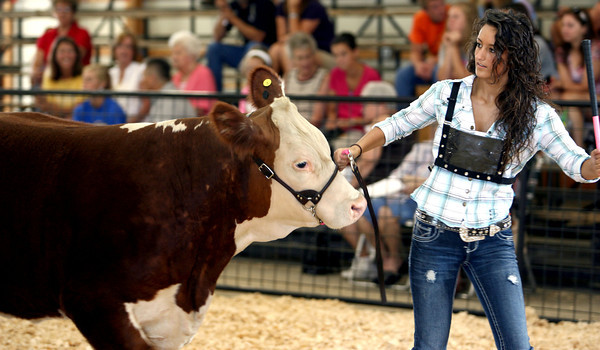7-10-12<br /> Howard County Fair<br /> Shelby Skaggs showing one of her animals in the steer show.<br /> KT photo | Tim Bath
