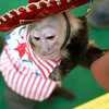 7-12-12<br /> JoJo the Monkey at Howard County Fair<br /> JoJo is trained to take a quarter from a person. After receiving the quarter he puts it in his pocket and tips his hat.<br /> KT photo | Kelly Lafferty
