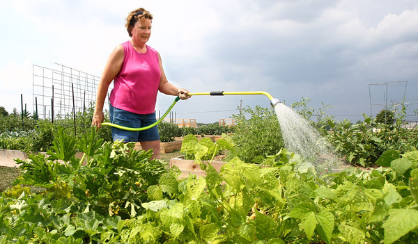 7-18-12<br /> Kelly Fitzgerald waters, picks a few items and weeds her plot at the community garden located just west of the south branch of the Kokomo Howard County Public Library.<br /> KT photo | Tim Bath