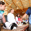 7-10-12<br /> Howard County Fair<br /> Sarrah Cummins, Kelsey Quinn and Allie Dicken listen to Todd Naragon judge their rabbits.<br /> KT photo | Tim Bath