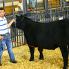 7-8-14 <br /> Howard County Fair. Brandon Deardorff showing a steer.<br /> Tim Bath | Kokomo Tribune