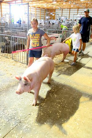 7-8-14 <br /> Howard County Fair. Ella and Audra Flannery taking their hogs for a wash.<br /> Tim Bath | Kokomo Tribune