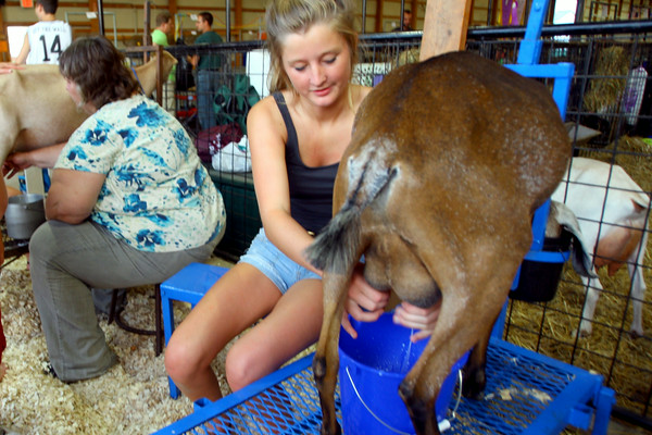 7-7-14 <br /> Howard County Fair. Angel Hawkins milking her goat.<br /> Tim Bath | Kokomo Tribune