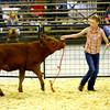 7-8-14 <br /> Howard County Fair. Audrey Wyrick showing a heifer.<br /> Tim Bath | Kokomo Tribune